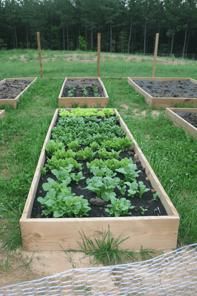 New Book Plan and Build a Raised Bed Vegetable GArden ...