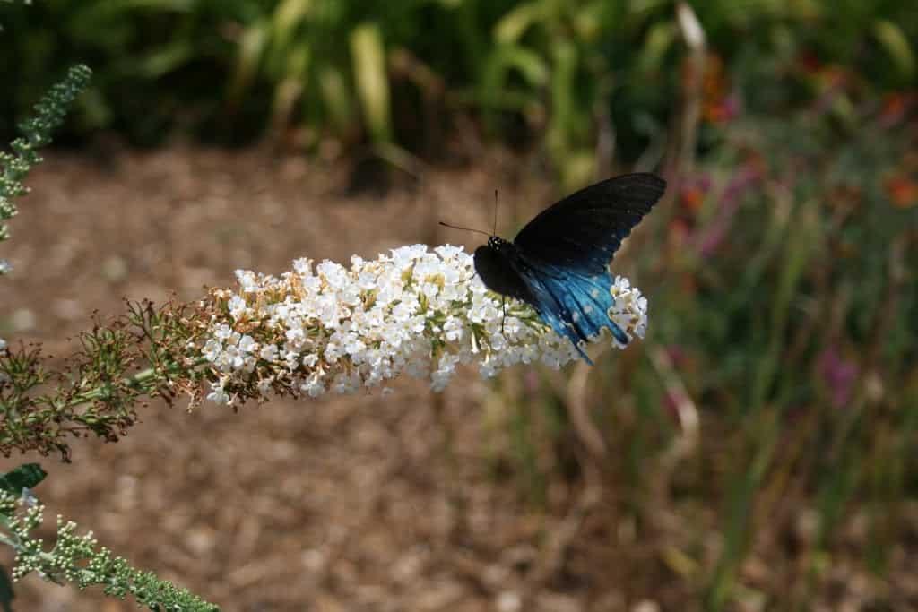 butterflyonwhite