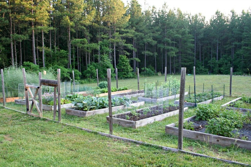 Is it safe to use pressure treated lumber in the vegetable - Safest material for raised garden beds ...
