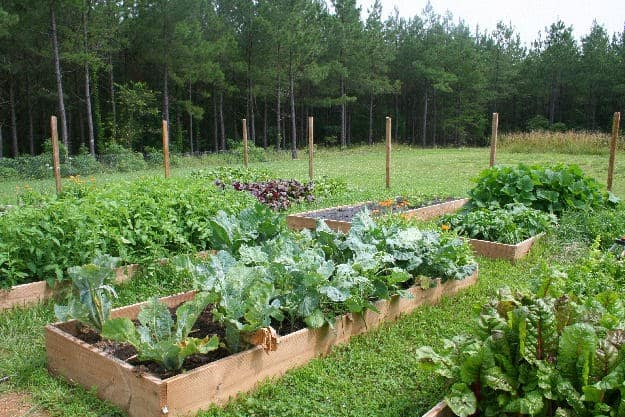 Pathways for a Raised Bed Vegetable Garden
