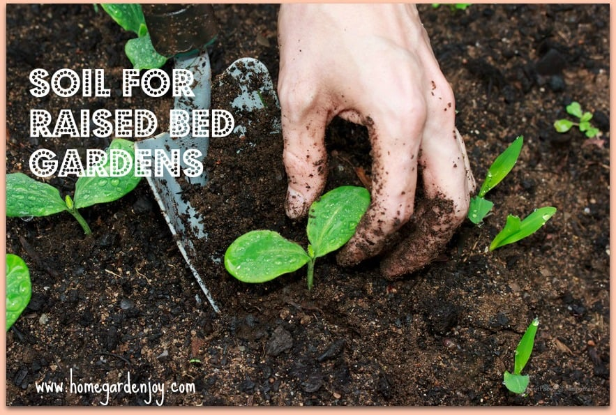 Soil For Raised Bed Vegetable Gardens Home Garden Joy