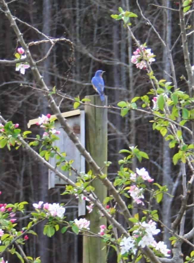 Make Your Backyard Into a Wild Bird Sanctuary – Home ...