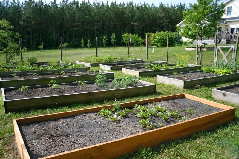 Plan and build a raised bed vegetable garden archives for Building a vegetable garden