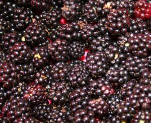 wild-blackberries