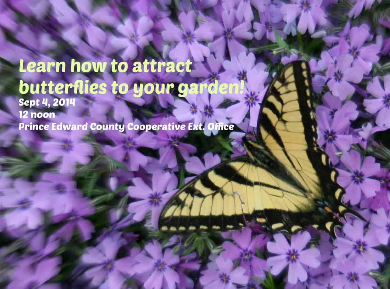 Learn How To Start A Butterfly Garden Home Garden Joy