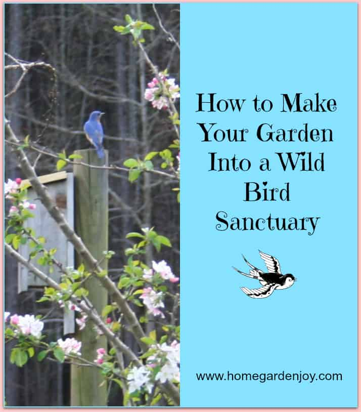 make your backyard garden into a wild bird sanctuary learn what to