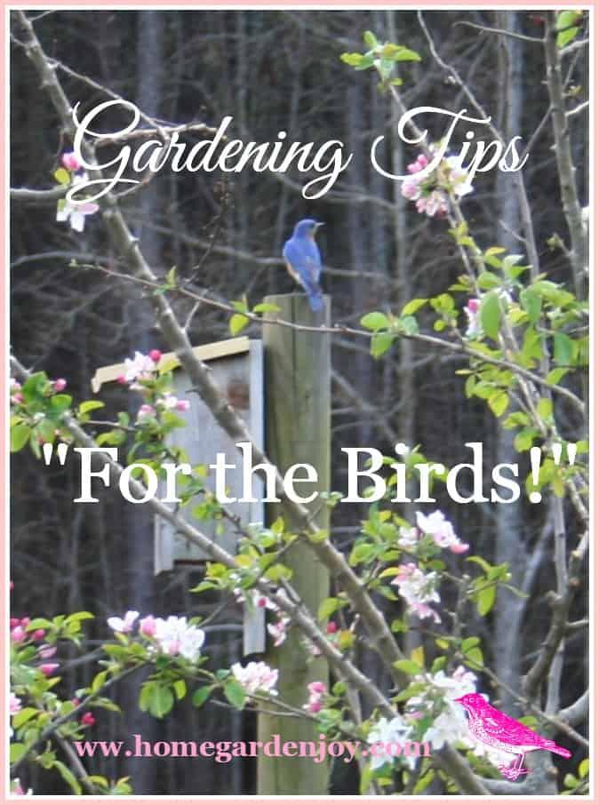 garden landscaping ideas create a backyard bird sanctuary home