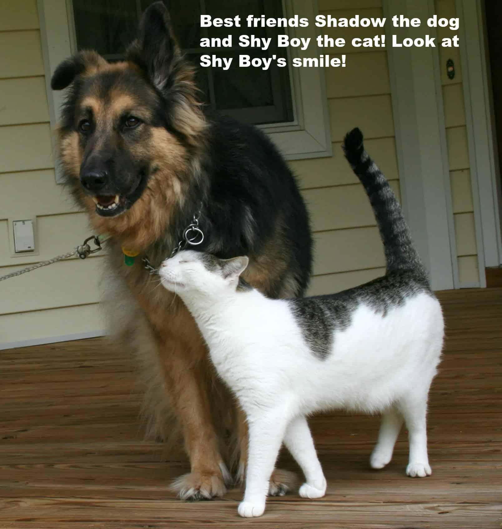 Best Friends Shadow Shy Boy