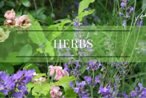 herbs and herbalism