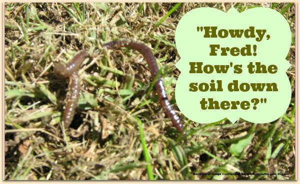 earthworm photo