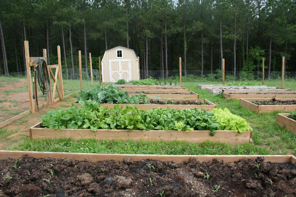 can you use pressure treated wood in a vegetable garden home garden joy