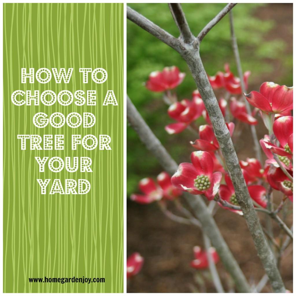 choosing a tree