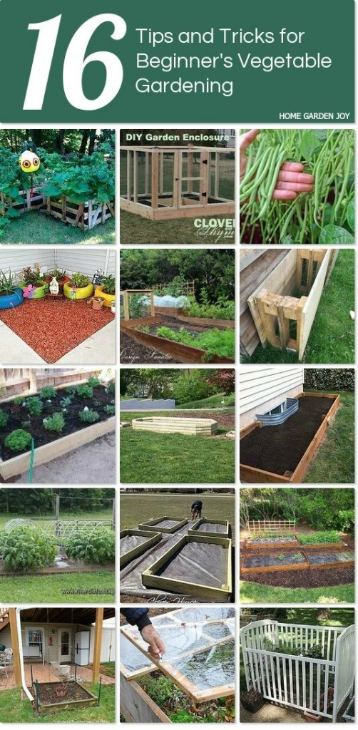 Collection of Raised Bed Vegetable Garden Resources Home