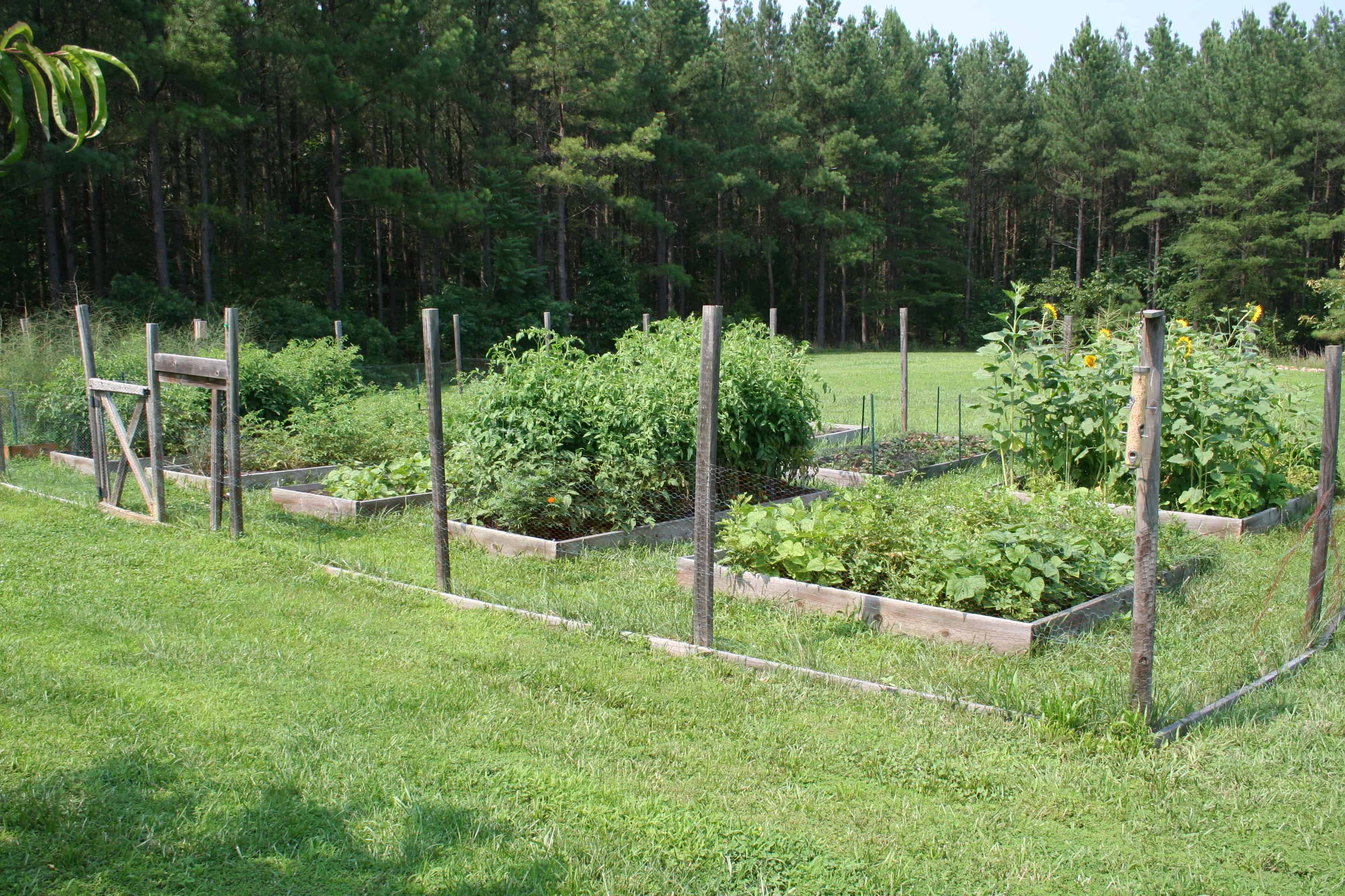 Vegetables Archives Page 6 of 34 Home Garden Joy – What to Plant in My Vegetable Garden
