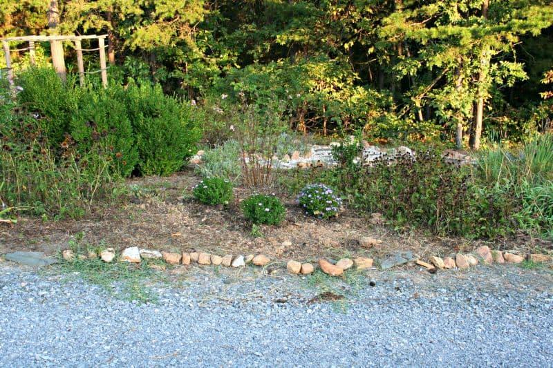asters perennial garden