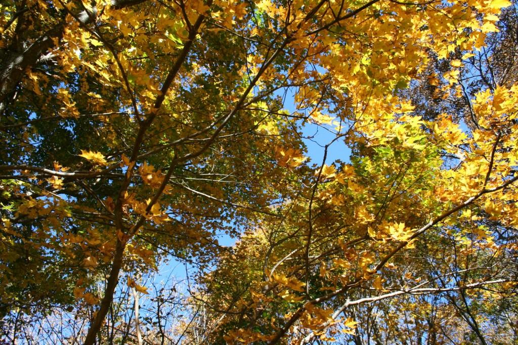 IMG_4748 Appalachian trail trees