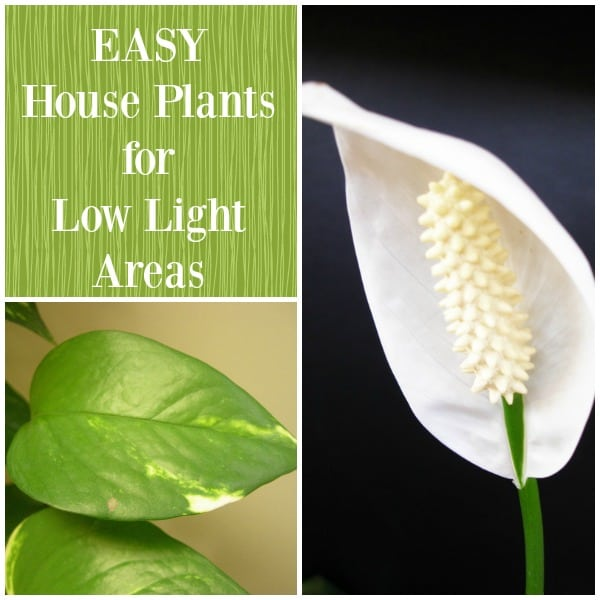 Best Low Light Plants For Bedroom: Best Plants For Low Light Areas