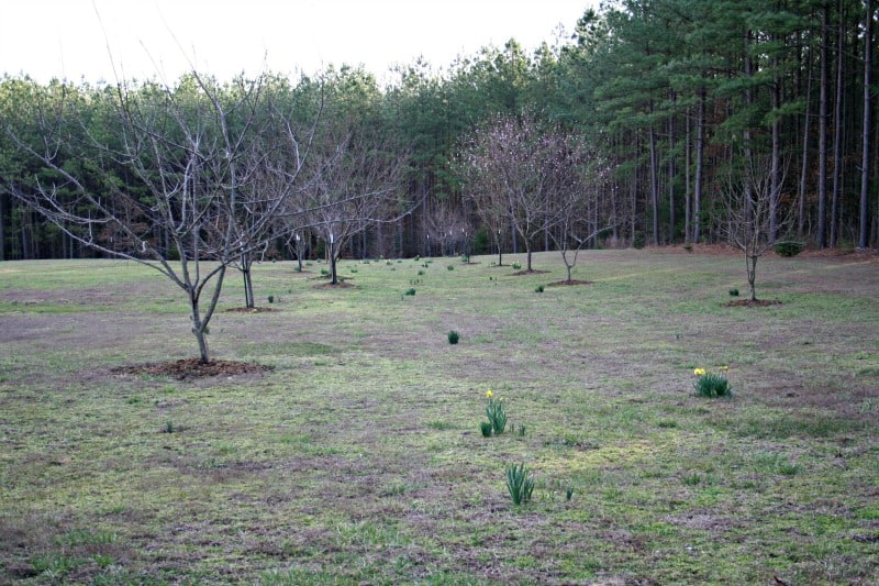 orchard early spring 2016