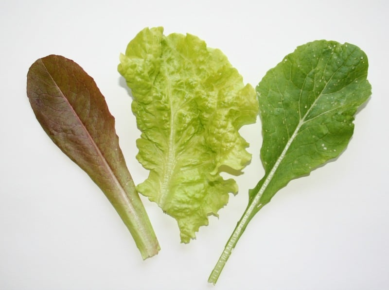 lettuce leaf comparison