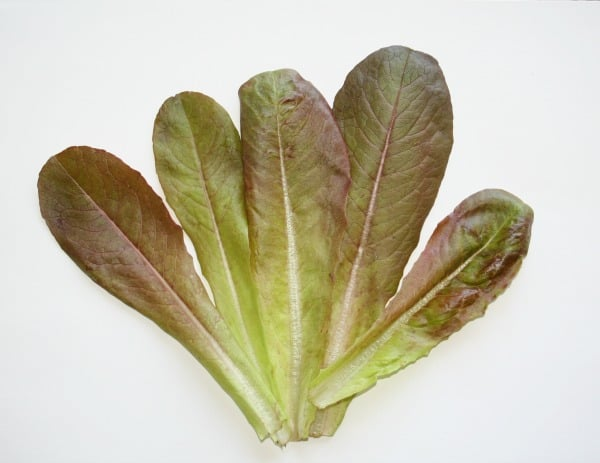 rouge dhiver lettuce