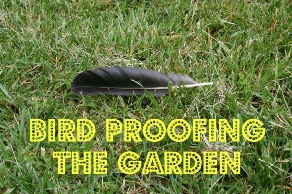 bird proof the garden