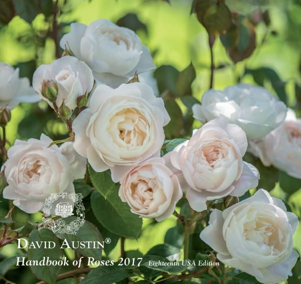New David Austin English Roses For 2017 Ready For Their Close Ups In Dual Garden Roles Home