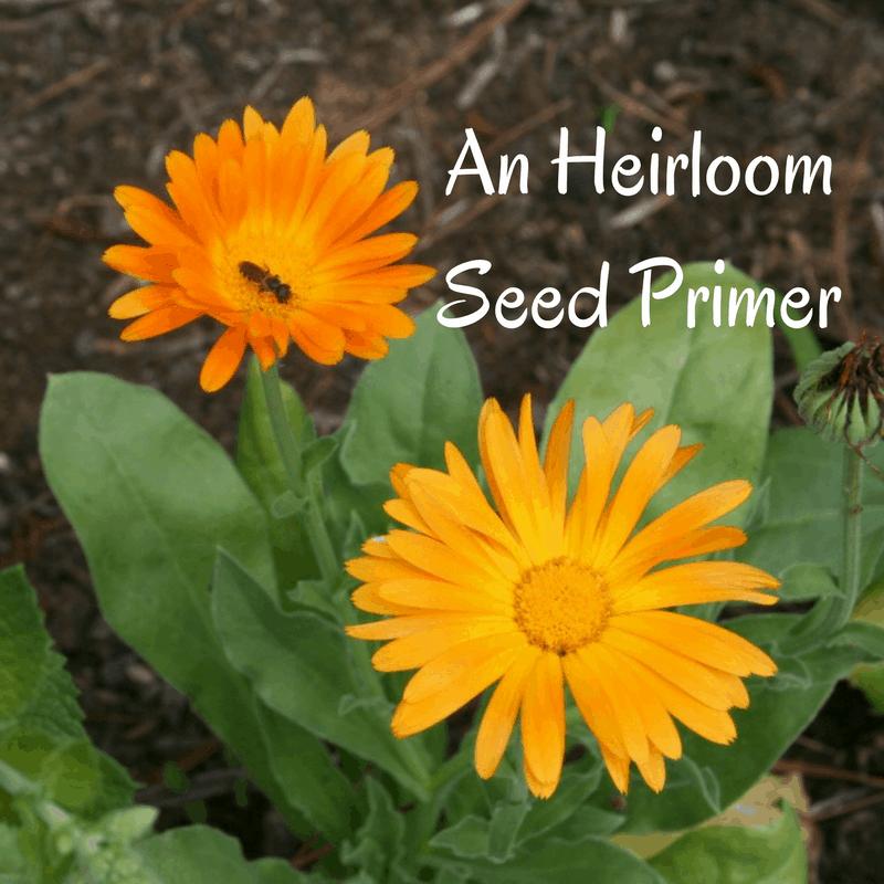 starting seeds indoors heirloom seeds