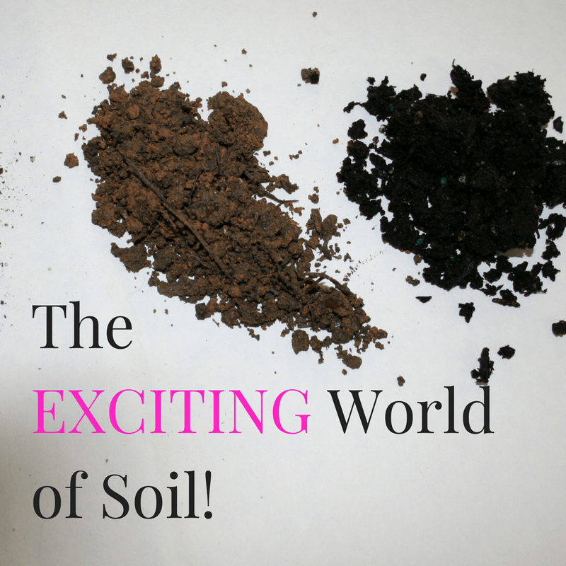 Soil for Container Vegetable Gardens