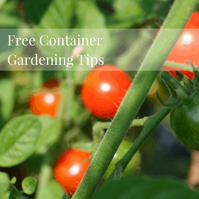 Free Container Gardening Tip Sheet to Download