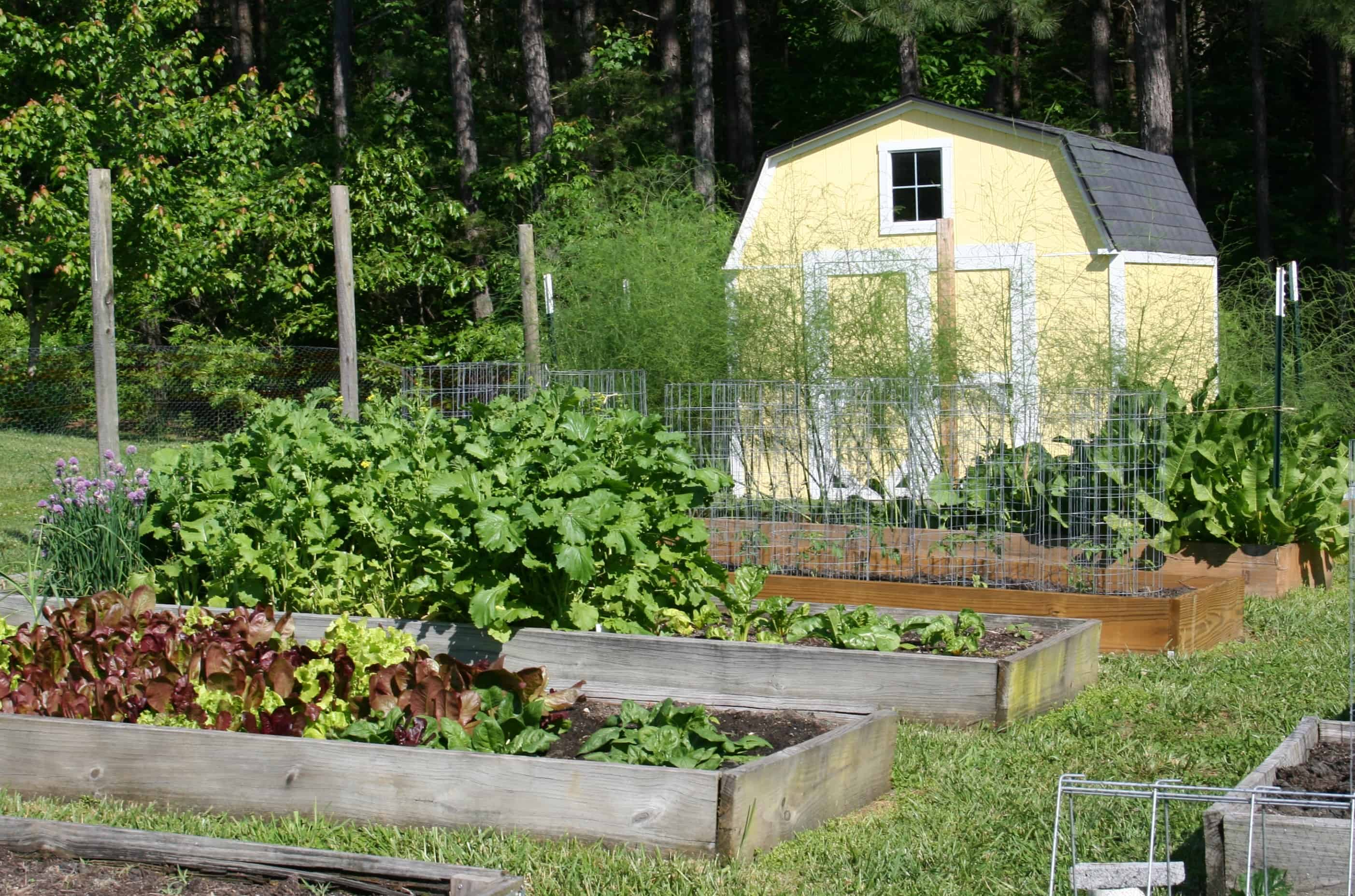 Transitioning the Vegetable Garden from Spring to Summer