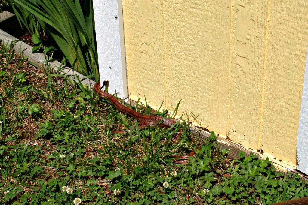 common garden pests