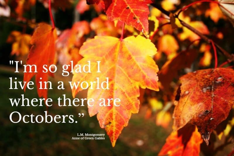 The October Update at Home Garden Joy