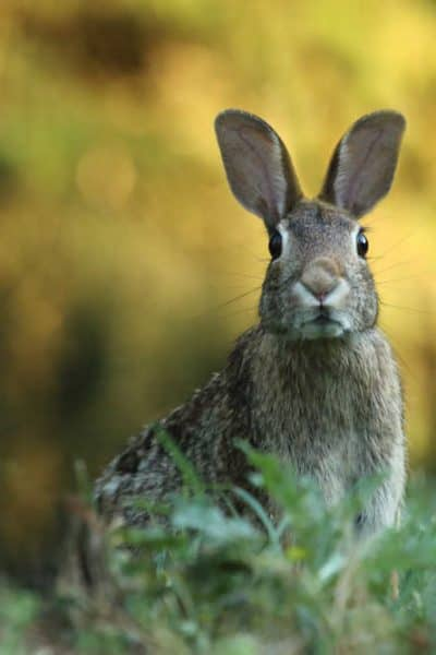 rabbits in the garden photo