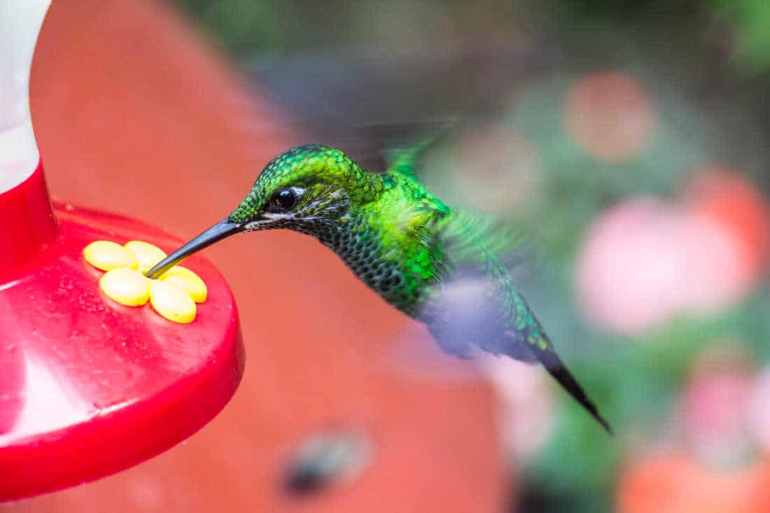 picture of feeders which attract hummingbirds