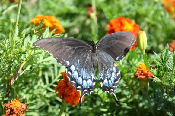 Free butterfly gardening information is back home garden joy for Garden information sites