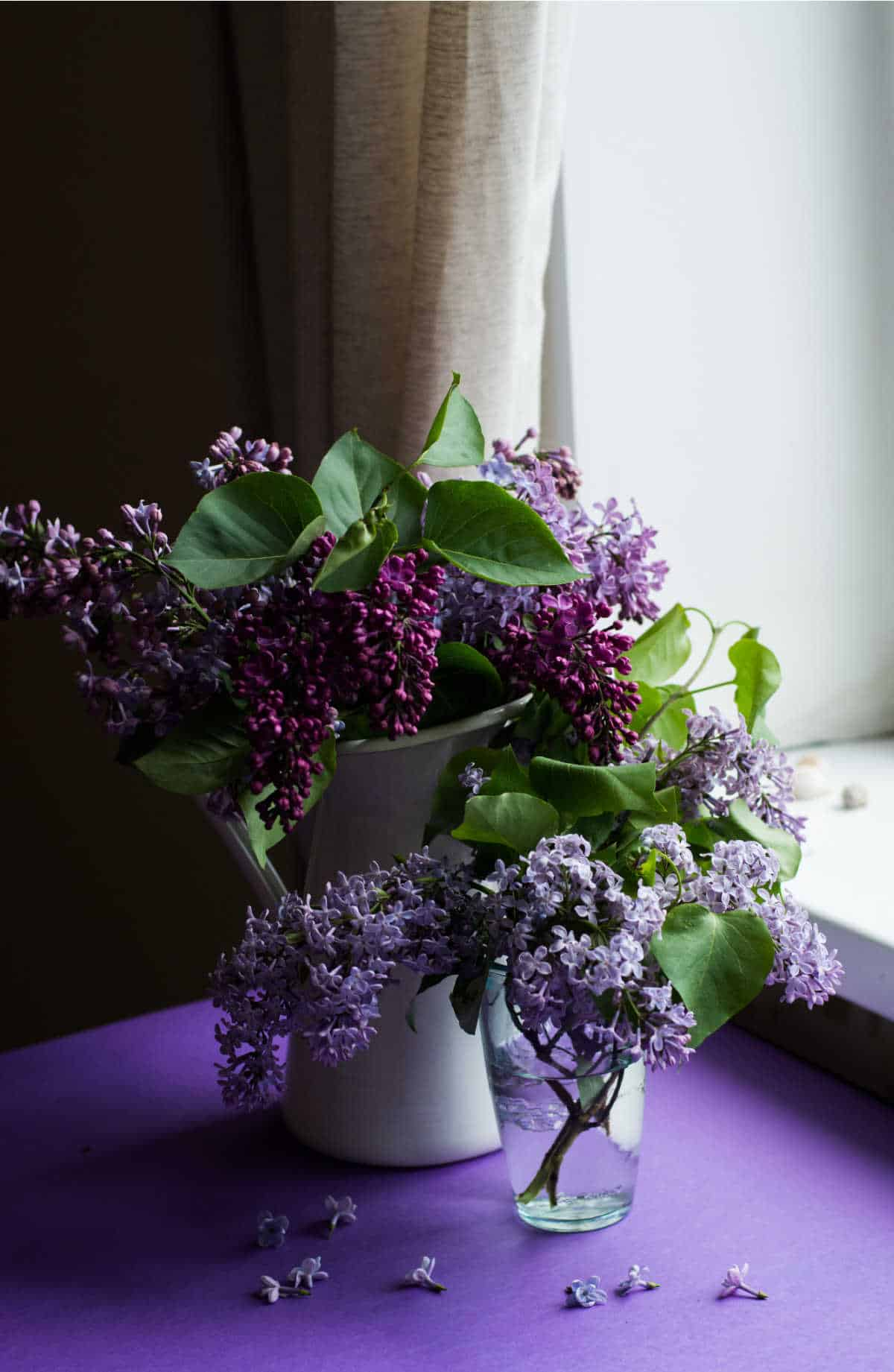 lilacs in a vase on a purple cloth