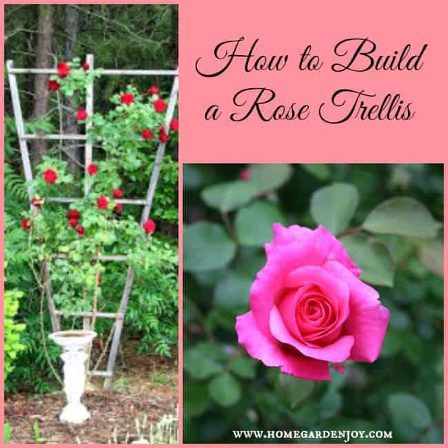 Rose Trellis Ideas Part - 27: How To Build A Climbing Rose Trellis