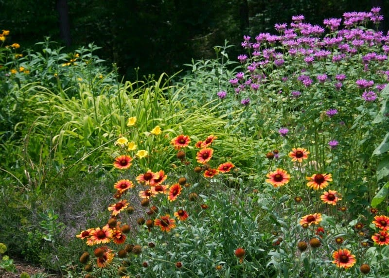 how to use plastic mulch garden