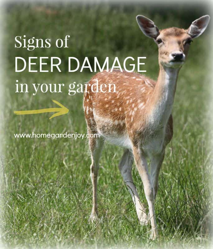 signs of deer damage_hotblack_morguefile photos