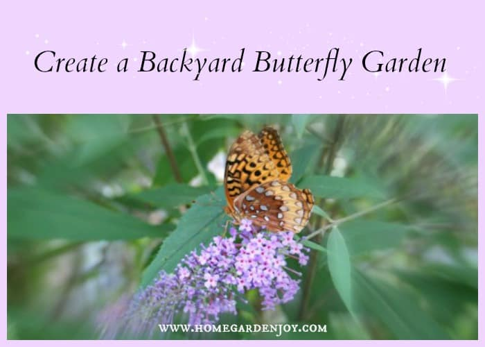 create a backyard butterfly garden