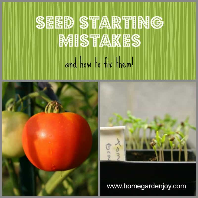 Seed Starting Mistakes sm