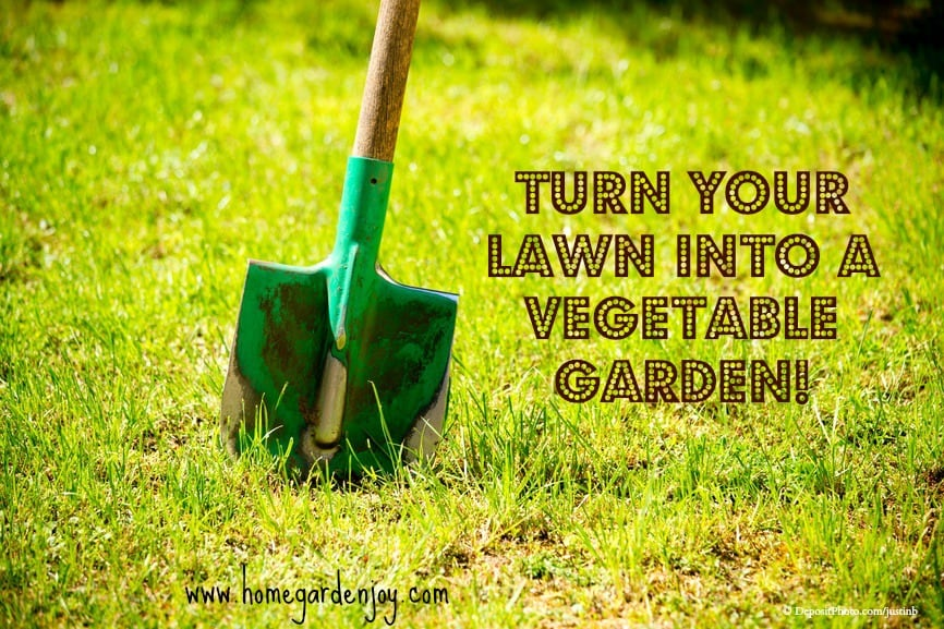 Turn Your Lawn Into A Vegetable Garden Home Garden Joy