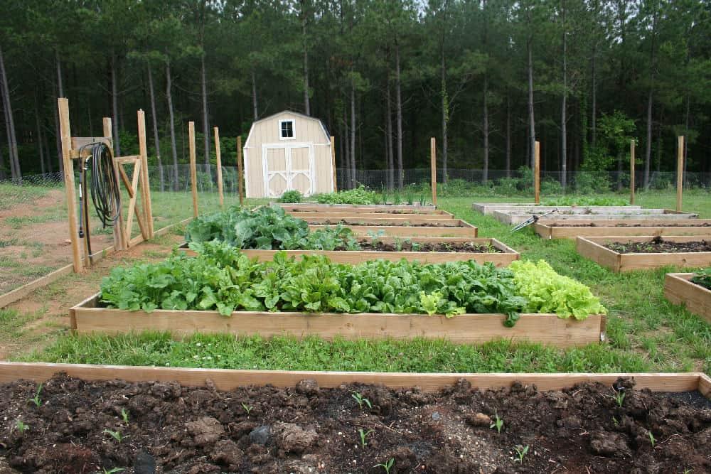 Soil for raised bed vegetable gardens home garden joy for Soil for vegetable garden raised bed
