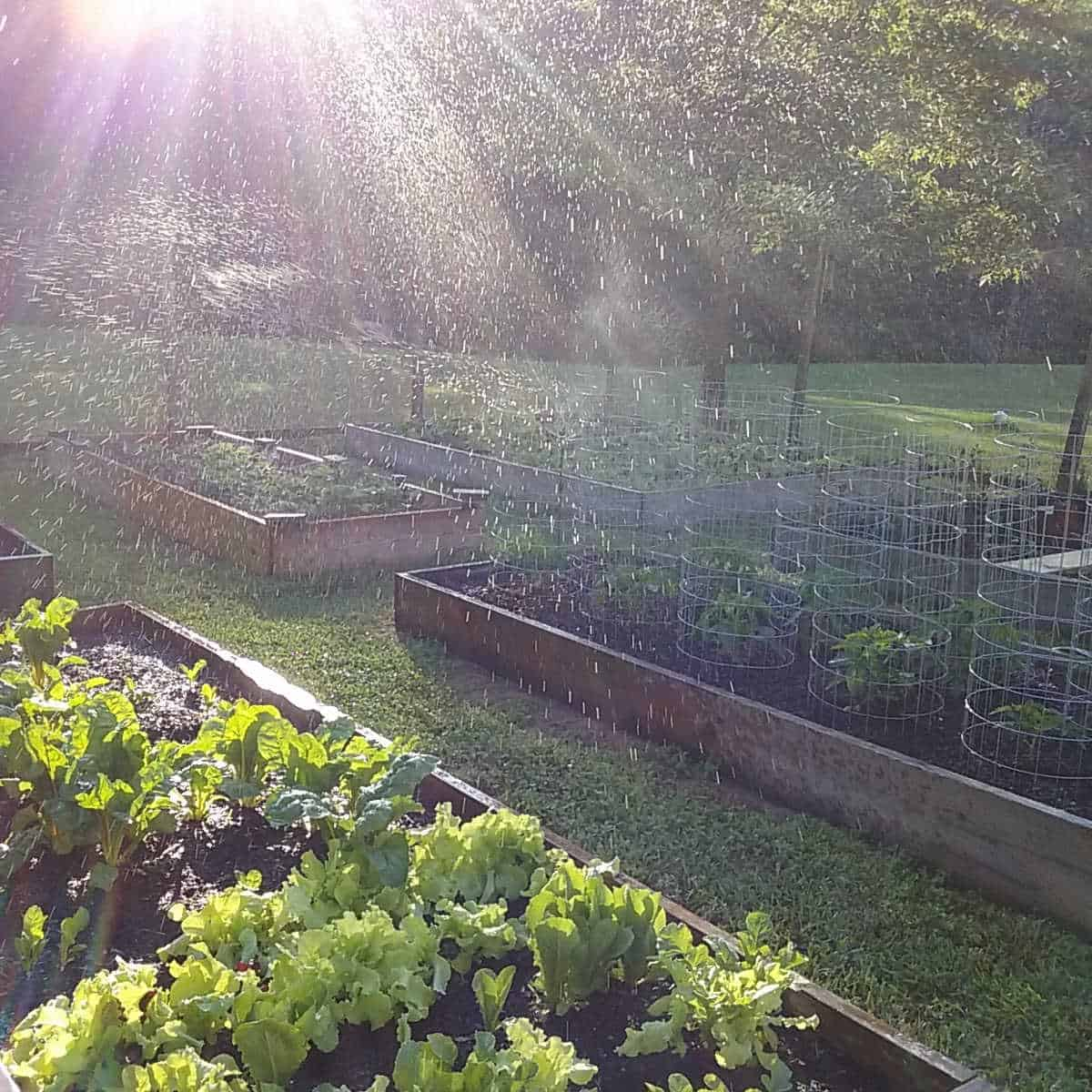 sunlight shining through water droplets over a raised bed garden