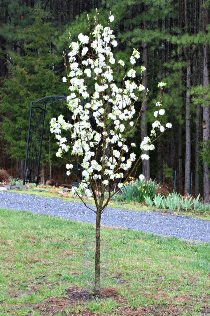 Flowering Trees for Your Front Yard - Home Garden Joy