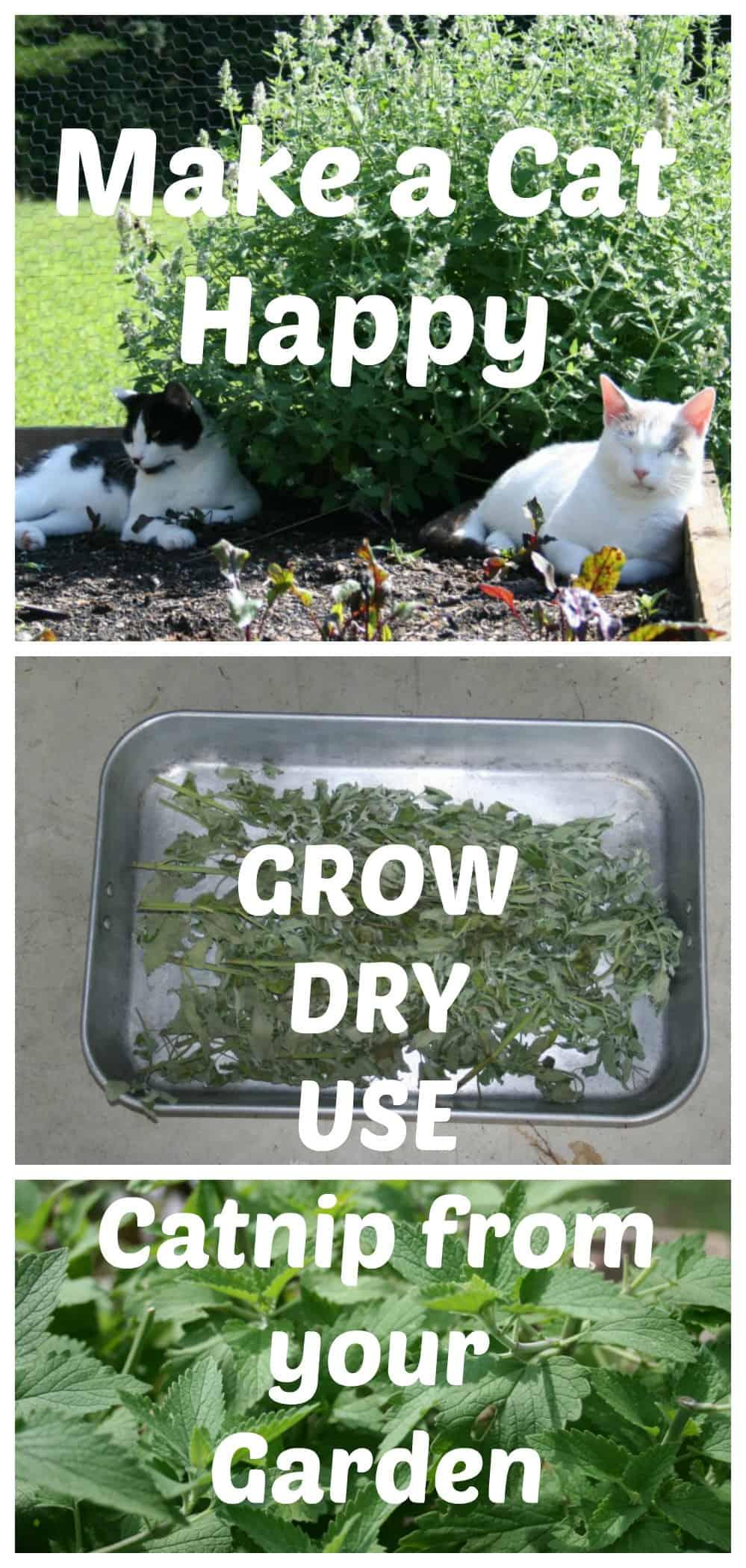 catnip collage - Garden Joy