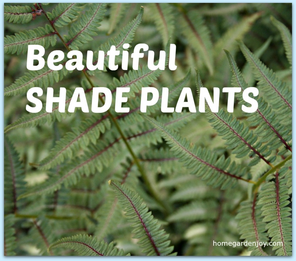Five Beautiful Shade Plants For Your Garden Home Garden Joy
