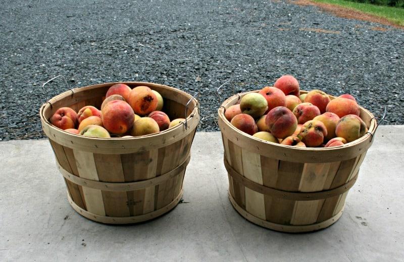 two bushels of peaches