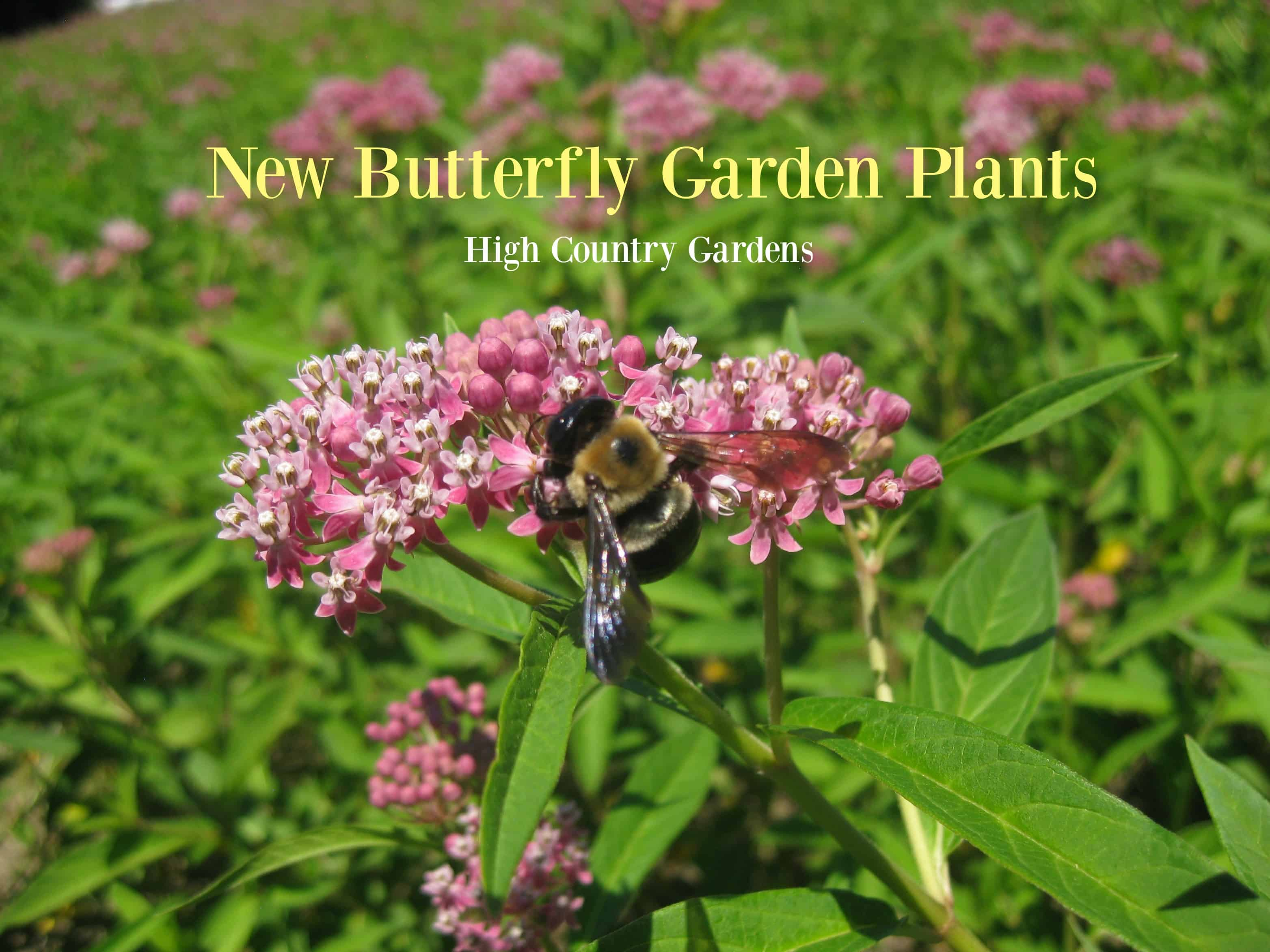 New Butterfly Garden Perennials