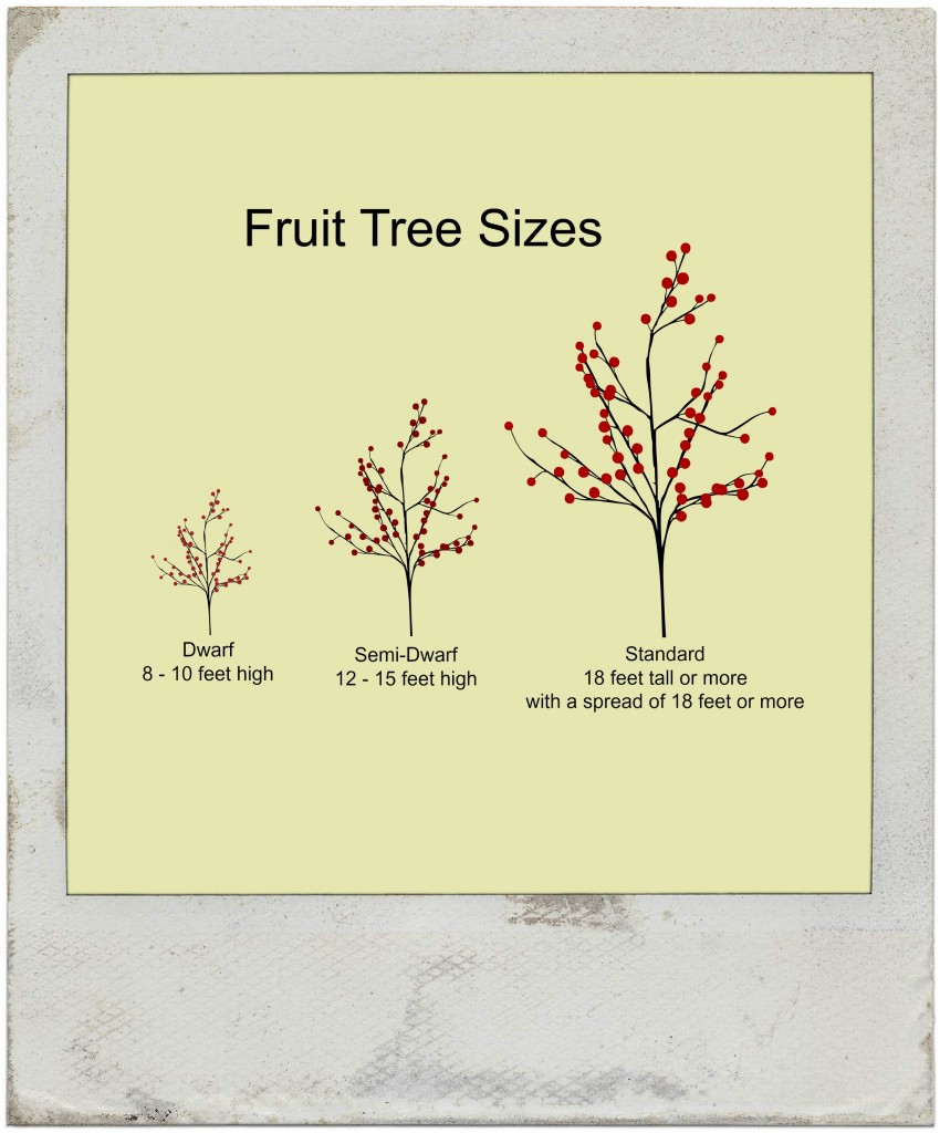 Fruit Tree sizes